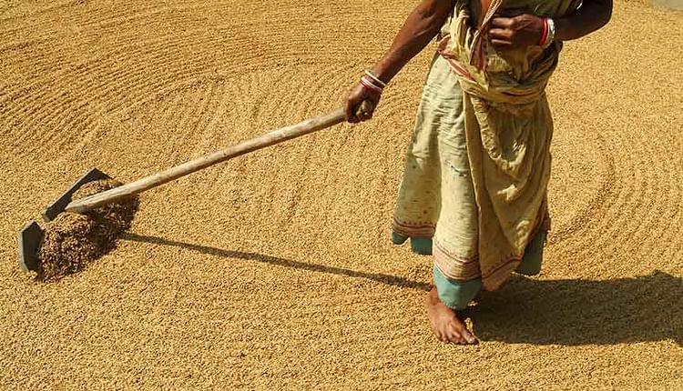 If Indian agriculture has to become part of the global supply chain, the farm sector in India has to get into a partnership with Indian and global industry.Courtesy: Getty Images  For democracy's sake, Modi government must now stand firm on new agricultural laws democracys sake Modi government must now stand firm on new agricultural laws  2